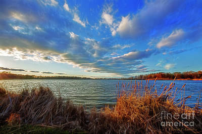 Photograph - Reeds And Wind by David Arment