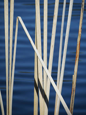 Photograph - Reeds by Azthet Photography