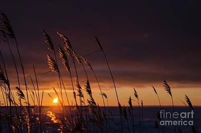 Photograph - Reeds By Sunset by Kennerth and Birgitta Kullman