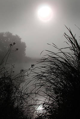 Photograph - Reeds By The Lake by Jeffrey Ringer