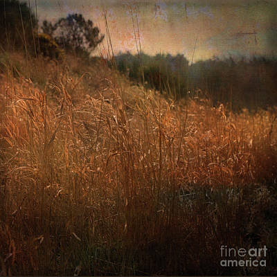 Digital Art - Reeds By The River by Liz Alderdice