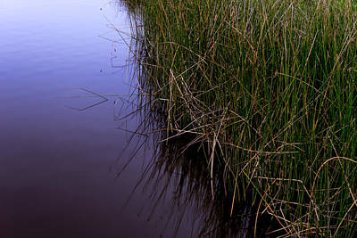 Photograph - Reeds by Derek Dean