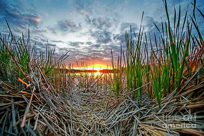 Photograph - Reeds Frame Sunset by David Arment