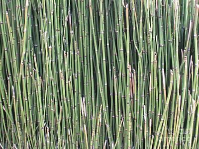 Photograph - Reeds by Glenda Zuckerman