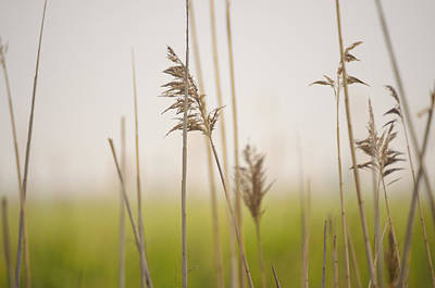 Photograph - Reeds In The Mist IIi by Marianne Campolongo