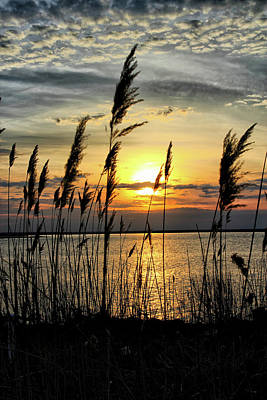 Photograph - Reeds by John Loreaux