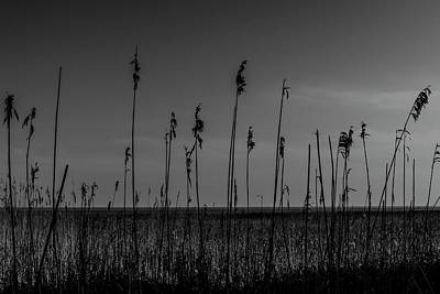 Photograph - Reeds by Keith Elliott