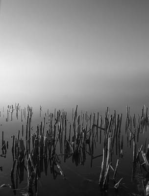 Photograph - Reeds by Larry Bohlin