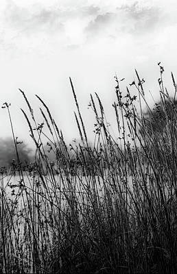 Digital Art - Reeds Of Black by JGracey Stinson