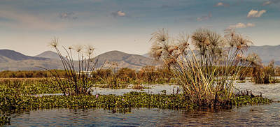 Reeds Of Lake Naivasha Art Print