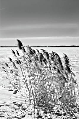 Reeds On A Frozen Lake Art Print
