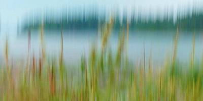Photograph - Reeds by Patricia Strand