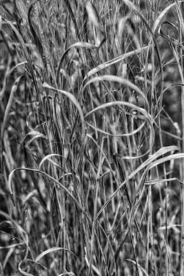 Target Threshold Nature Royalty Free Images - Reeds Royalty-Free Image by Ronald Watkins