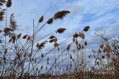Little Mosters - Reeds Waving in Color by Barrie Stark