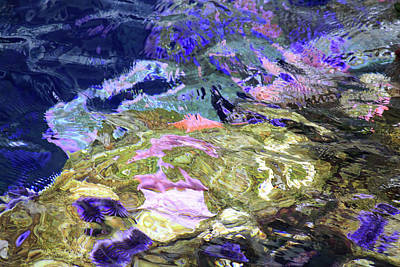 Photograph - Reef Abstract by Bonnie Follett