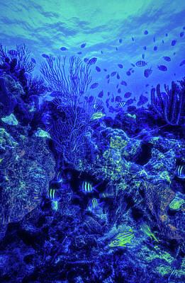 Photograph - Reef In Blues by Debra and Dave Vanderlaan