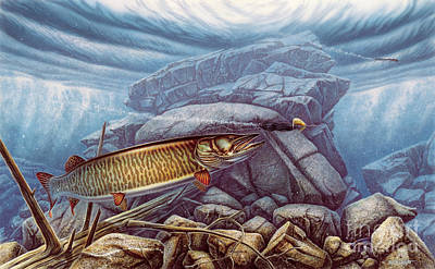 Reef King Musky Art Print by Jon Wright