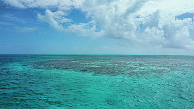 Photograph - Reef Off Ambergris Caye, Belize by Waterdancer