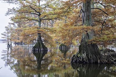 Photograph - Reelfoot Lake 05 by Jim Dollar