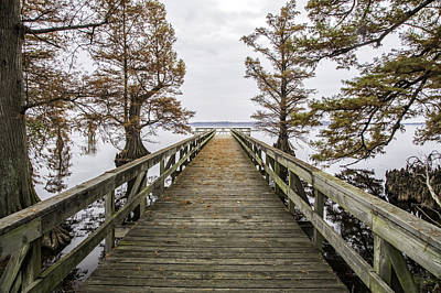 Photograph - Reelfoot Lake 18 by Jim Dollar