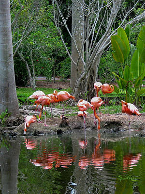 Photograph - Reflected Flamingos by Susan Molnar