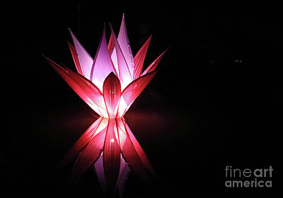Photograph - Reflected Illuminated Flower Wisley by Julia Gavin
