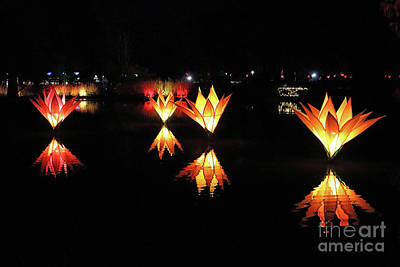Photograph - Reflected Illuminated Flowers Wisley by Julia Gavin
