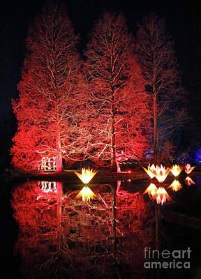 Photograph - Reflected Illuminated Trees Wisley by Julia Gavin