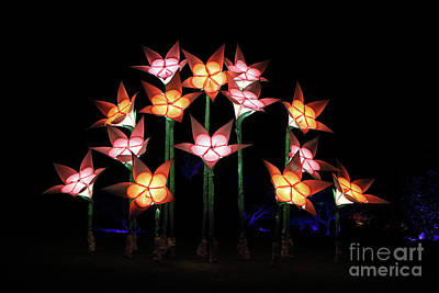 Photograph - Illuminated Tulips Wisley by Julia Gavin
