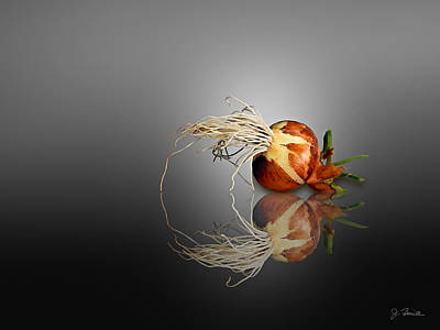 Photograph - Reflected Onion No. 2 by Joe Bonita