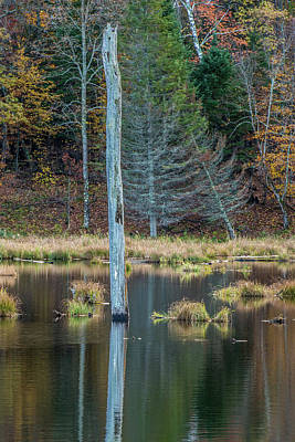 Photograph - Reflected Tree by Paul Freidlund