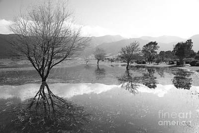 Sete Photograph - Reflected Trees by Gaspar Avila