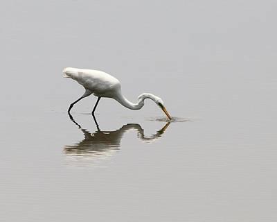 Reflecting Egret Art Print by Al Powell Photography USA