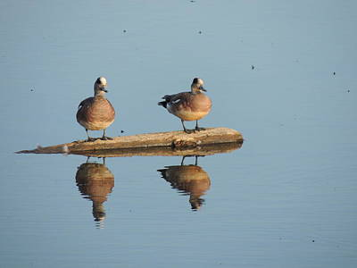 Photograph - Reflecting Eurasian Wigeons by Red Cross