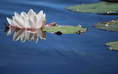 Photograph - Reflecting In Blue Water by Amee Cave
