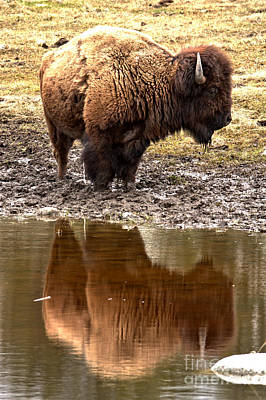 Photograph - Reflecting In Yellowstone by Adam Jewell