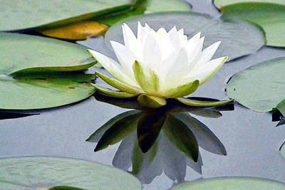 Photograph - Reflecting Luminous Water Lily by Nicki Bennett