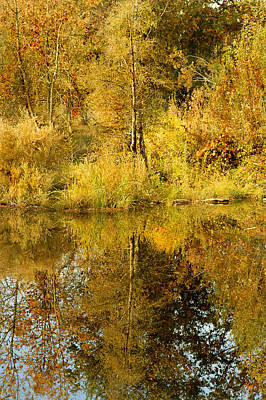 Photograph - Reflecting On Autumn Leaves by Pamela Patch
