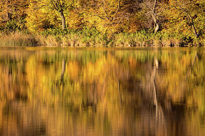 Photograph - Reflecting On Autumn by Penny Meyers