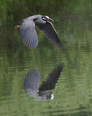 Nature Photograph - Reflecting On Flight by Shane Bechler