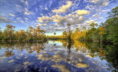 Reflecting On Florida Wetlands Art Print by JC Findley