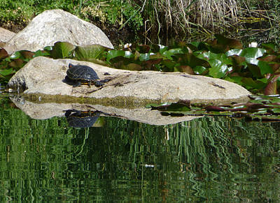 Photograph - Reflecting On The Life Of A Turtle by Claudia Goodell
