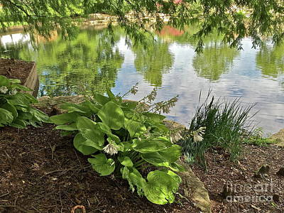Photograph - Reflecting Pond by Barbara Plattenburg
