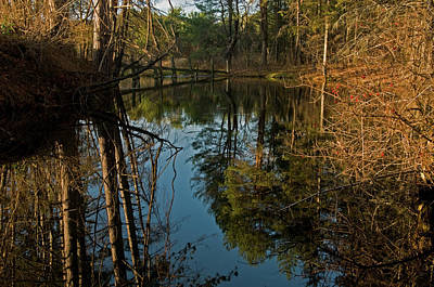 Photograph - Reflecting Pond by Paul Mangold