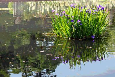 Irises Digital Art - Reflecting Pond by Suzanne Gaff