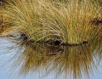 Reflecting Reeds Print by Marty Koch
