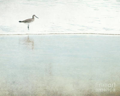 Photograph - Reflecting Sandpiper by Sharon Coty