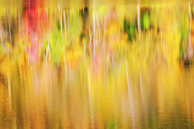Photograph - Reflecting Tree Abstract by Scott Kemper