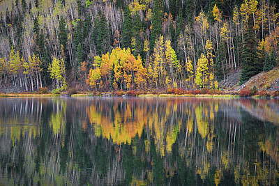 Photograph - Reflection by Aaron Spong