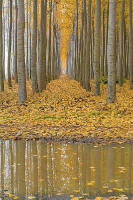 Photograph - Reflection At Poplar Tree Farm In Boardman Oregon by David Gn